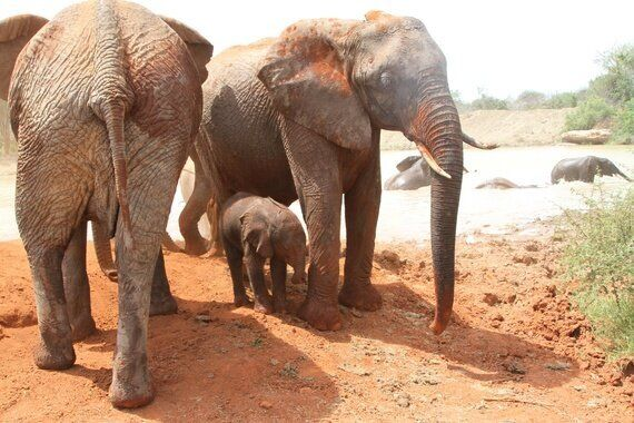 New Life Gives Hope to Africa's