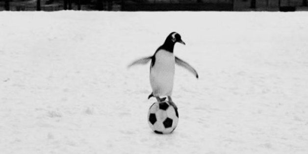 Penguin Awareness Day: 21 Penguin GIFs You NEED To Be Aware