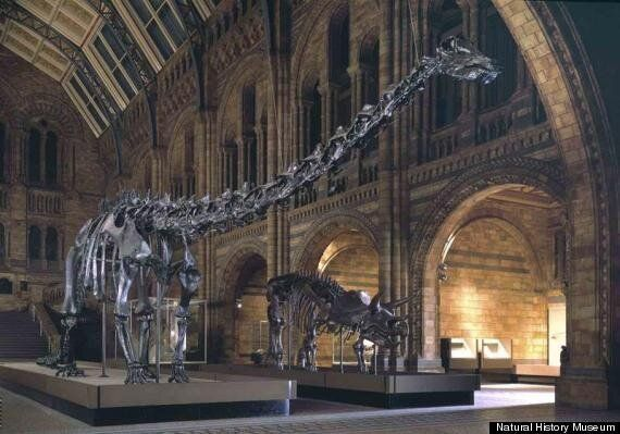 Dippy The Diplodocus At The Natural History Museum Is Being Replaced And It's Causing