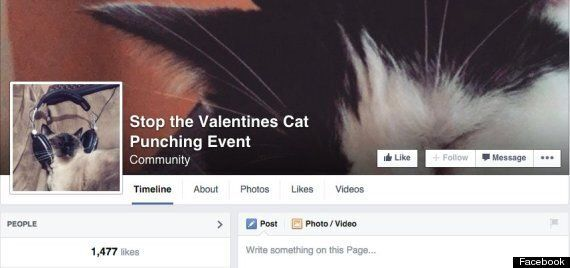 Facebook 'Valentine's Day Cat-Punching' Page Taken Down After Animal Rights