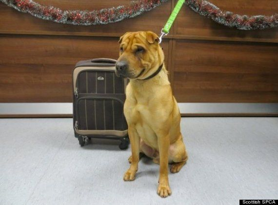 'Crying' Dog Found Abandoned At Eastbourne Railway