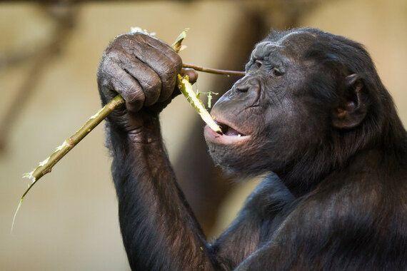 Animals Acting Suspiciously Like