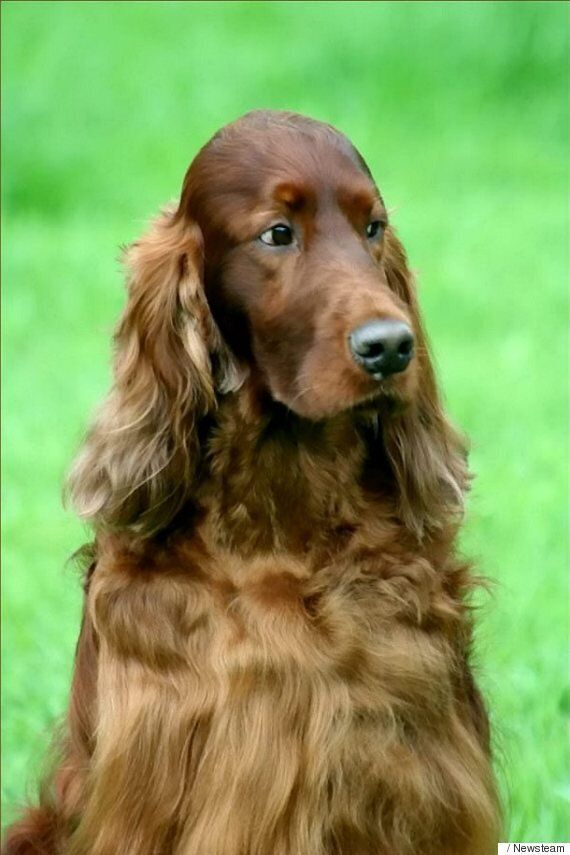 Crufts Jagger 'Murder' Still A Mystery As More Dogs Fall