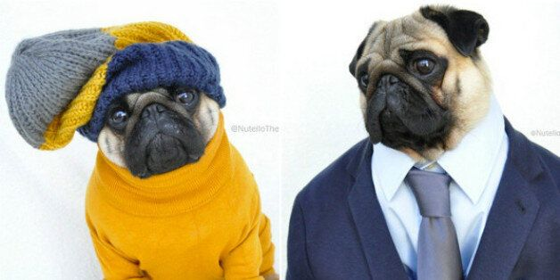 Nutello The Pug May Be The Best-Dressed Dog On The