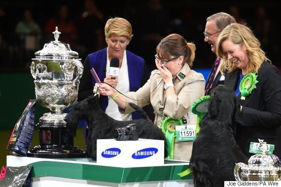 Crufts 'Poisoning' Hit Six Dogs As Jagger 'Murder' Mystery