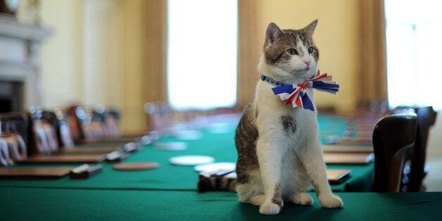 Larry, the 10 Downing Street cat, sits on the cabinet table wearing a British Union Jack bow tie ahead...