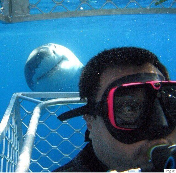 Great White Shark Photobomb Picture Has Lead Us To This Amazing Instagram