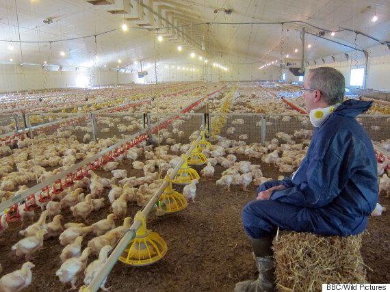 BBC KFC Documentary 'Billion Dollar Chicken Shop' Reveals The Life Of Fast Food