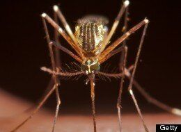 Deadly Mosquitoes En Route to