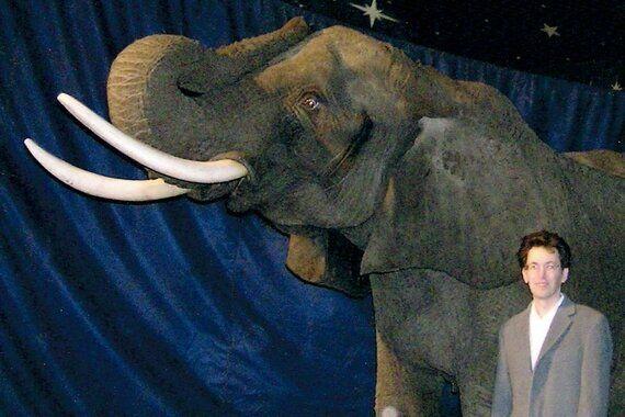 Can Robot Elephants Replace Circus