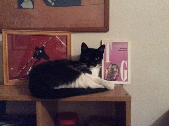 5 Ways to Keep 'your' Cat Intellectually