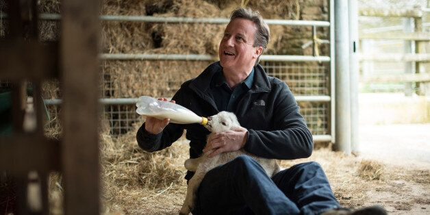 CHADLINGTON, ENGLAND - APRIL 5: Prime Minister and leader of the Conservative Party David Cameron feeds...