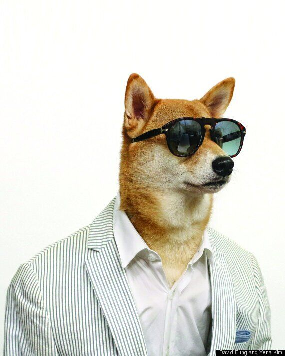Your New Style Icon: Menswear Dog On What To Wear To A Summer