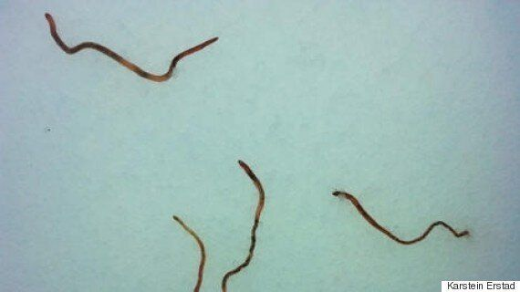 Earthworms Rain From The Skies In Southern