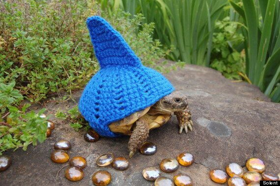Tortoise 'Shell Suits' Are An Etsy Hit For Katie Bradley