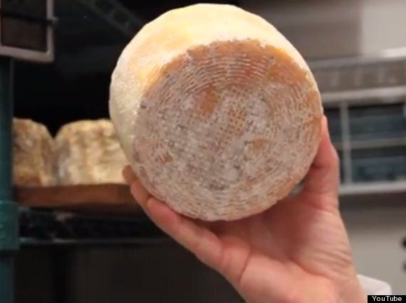 The Human Cheeses Made From Armpit, Feet And Bellybutton Bacteria