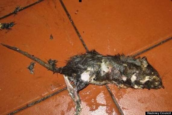 Rotting Rat Carcass Closes Cu Tu Vietnamese Restaurant On Kingsland Road,