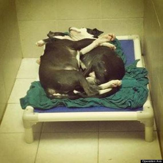 Blind Puppy And 'Seeing Eye' Brother Found New Homes After Picture Of Them Sleeping Goes
