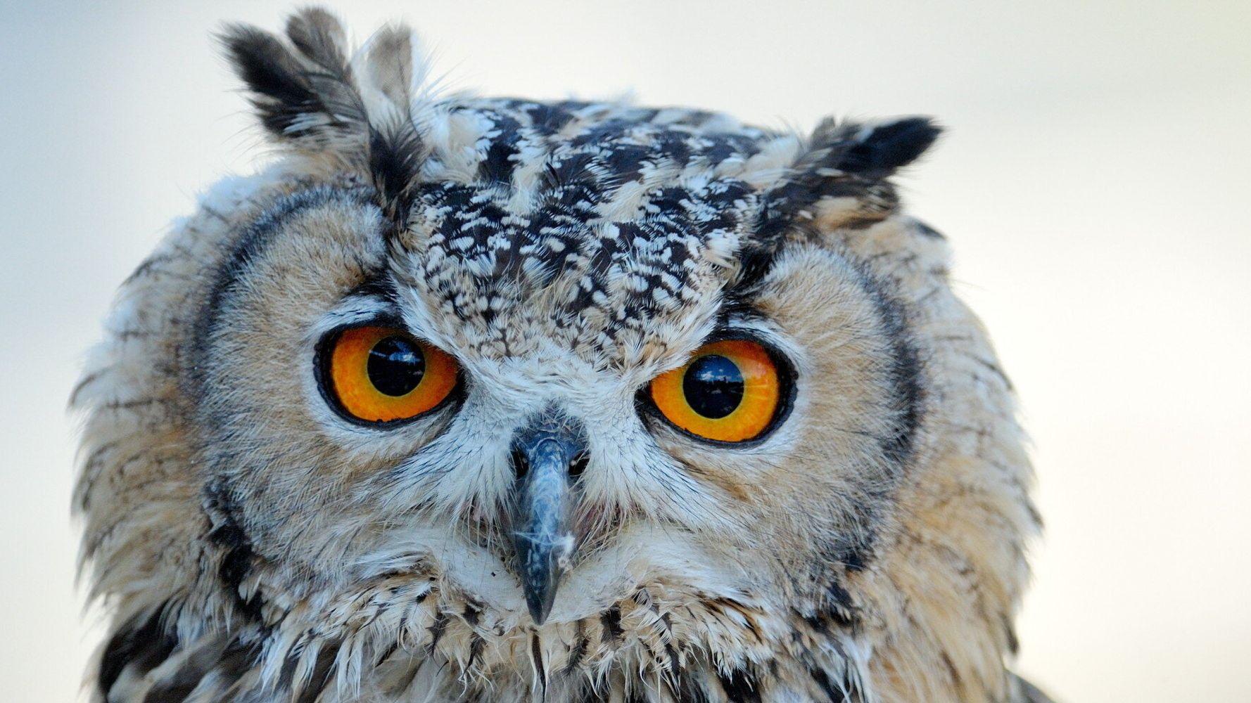 A Barn Owl Diary   HuffPost UK Life