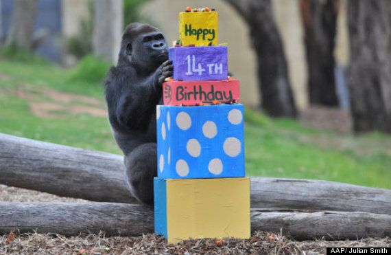 Baby Gorilla & Cold Stethoscope: Yakini Celebrates 14th Birthday