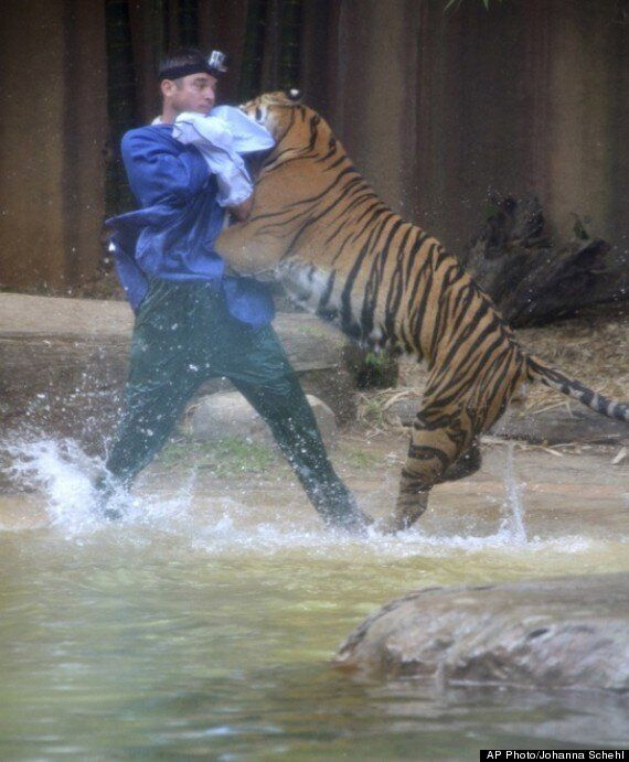 Dave Styles, Australia Zoo Keeper Attacked By Tiger, Bitten On The Head