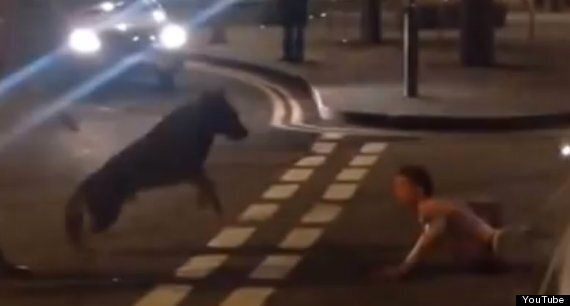 Police Dog Bites Man On Neck In Weston-Super-Mare