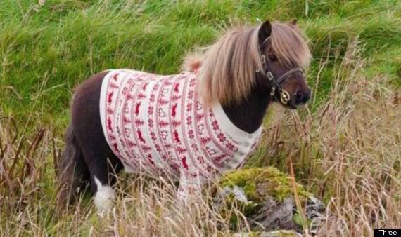 Three's Moonwalking Shetland Pony Socks Returns, And He's Wearing A Christmas Jumper