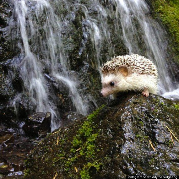 Biddy The Hedgehog's Travel Photos Are Our New Favourite Thing