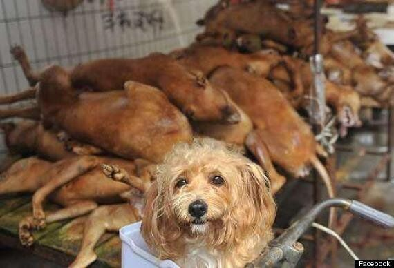 Chinese Dog Meat Festival In Which 10,000 Hounds Are Slaughtered Will Go Ahead Despite
