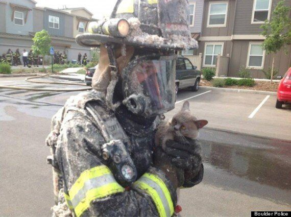Picture Of The Day: Unimpressed Cat Is Rescued From