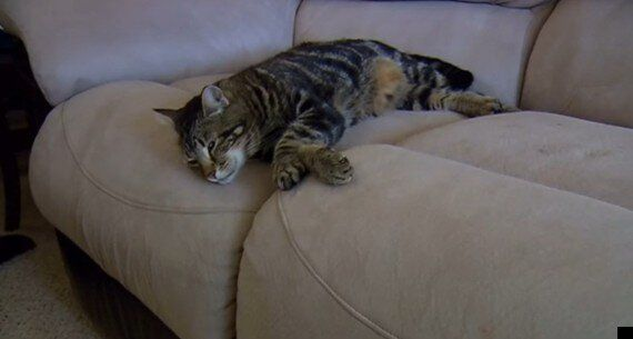Cat Saves Boy From Dog Attack: Jeremy Triantafilo Introduces His Hero Pet Tara