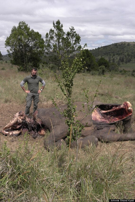 The Situation for Elephants Is Desperate - Please