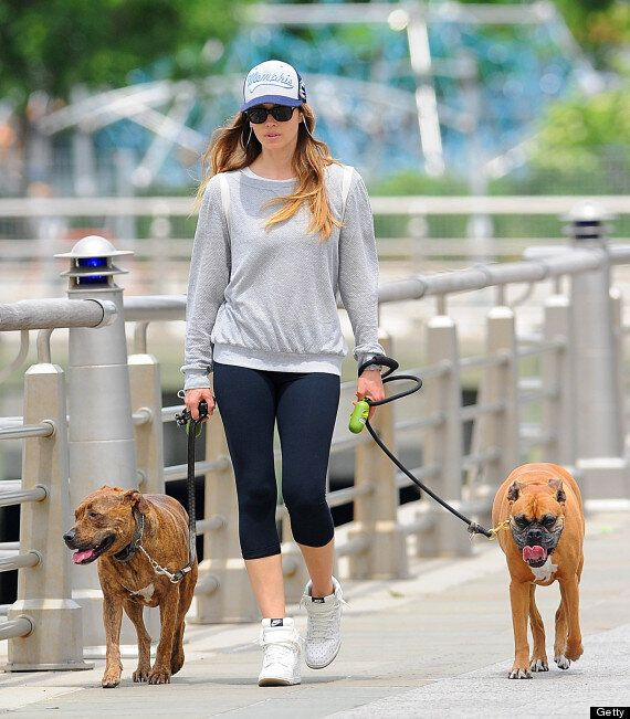 Jessica Biel Accused Of Animal Cruelty After Use Of Shock