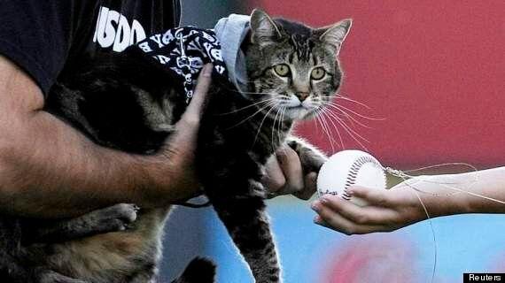 Hero Cat That Saved Boy 'Throws' First Pitch At Baseball