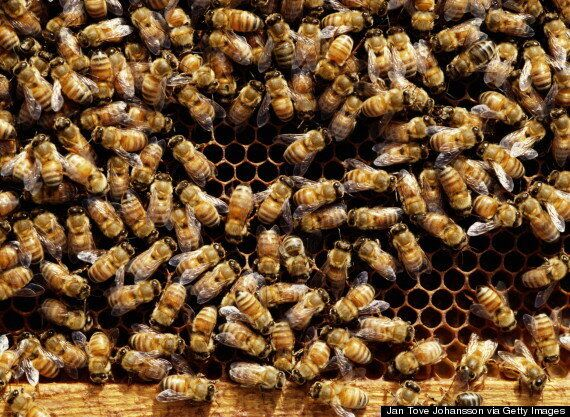 Lorry Sheds Load Of 20 Million 'Thirsty... Disoriented and Angry' Bees On American Highway