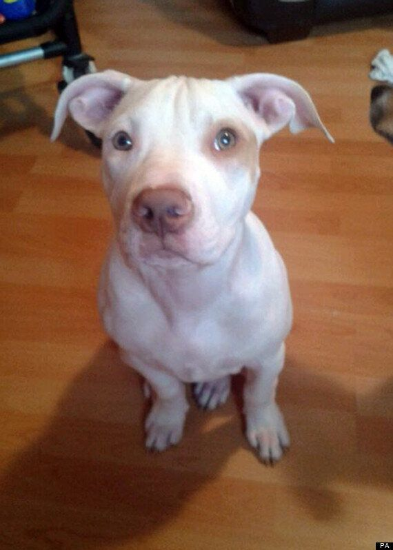 Missing Puppy Cookie Reunited With Owner After Facebook