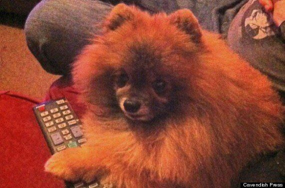 Police Seize Dog After Pomeranian Pet 'Has Head Ripped Off' In Warrington