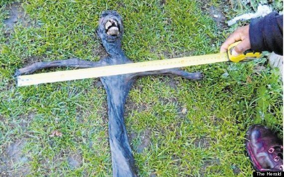 Terrifying Alien Creature Puzzles Residents In Plettenberg Bay, South Africa