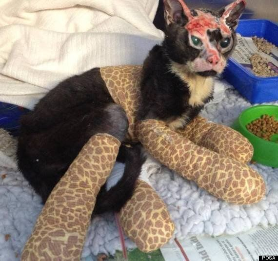 Robbie The Cat Took Refuge In A Sofa, Which Then Caught Fire Now He's Survivor Of The