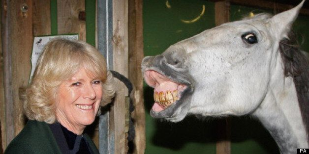 25 Funny Pictures Of Camilla, Duchess Of