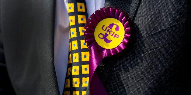 A UKIP supporter wears a rosette during UKIP leader Nigel Farage's visit on April 30, 2014 in Swansea,...