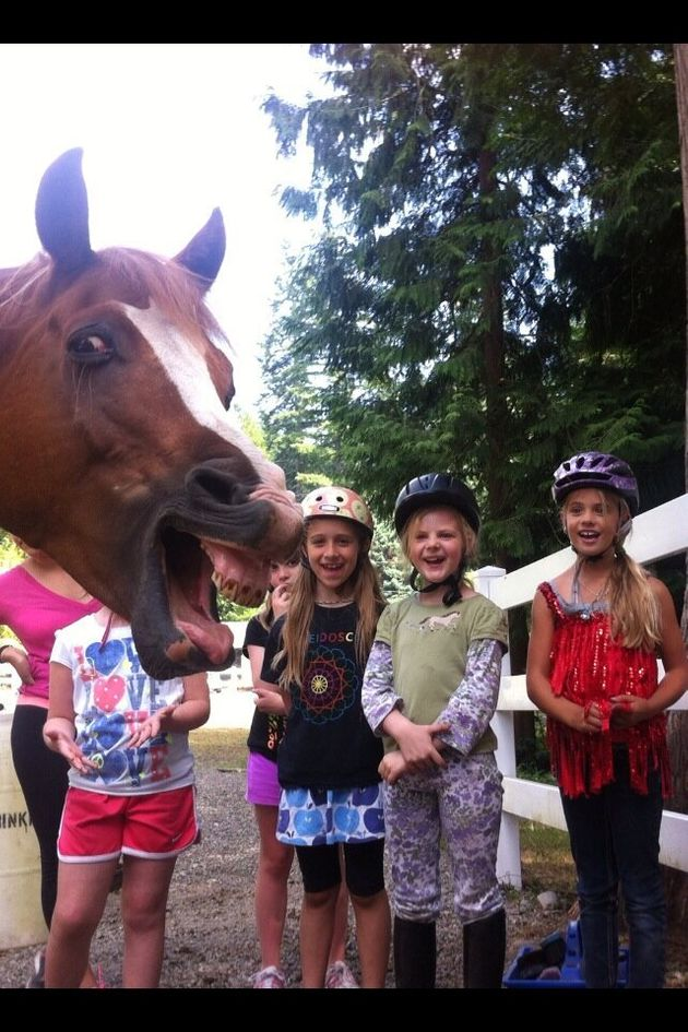 Horse Photobomb: You Won't See A Funnier Picture Than This