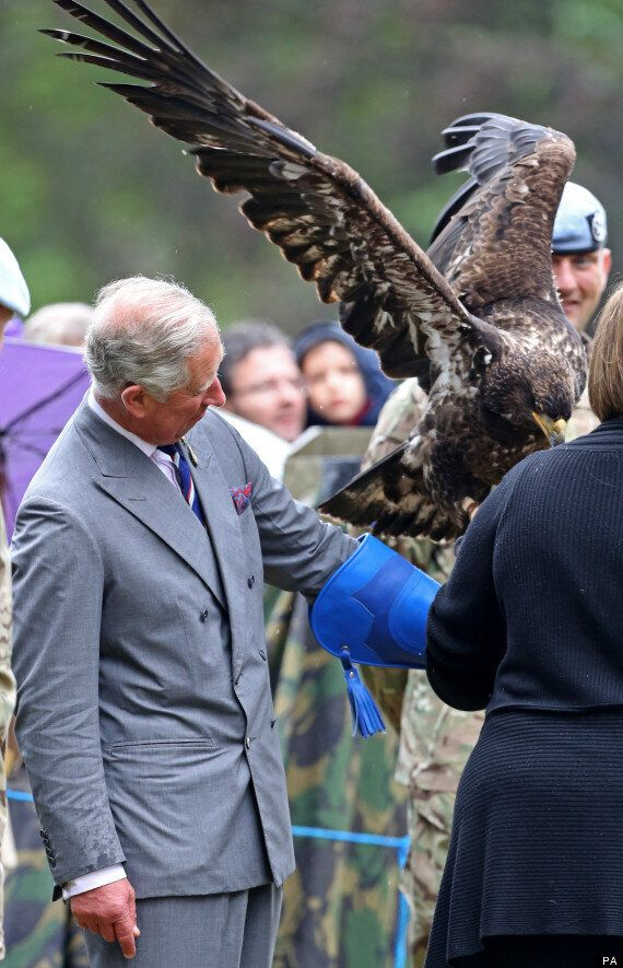Prince Charles Meets Bald Eagle At Sandringham Flower