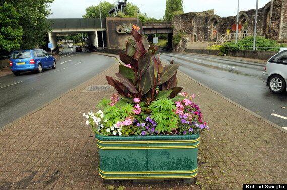 Cannabis Grown In Newport Council Flower Pots