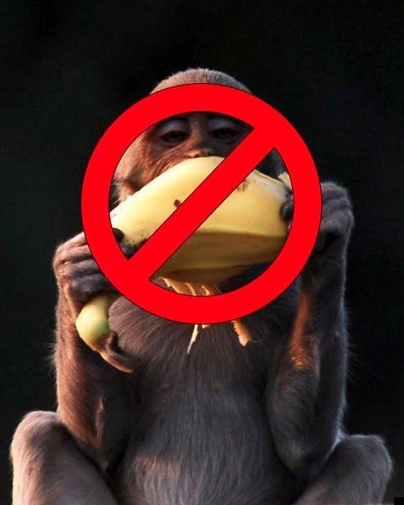 Monkeys Banned From Eating 'Unhealthy' Bananas At Paignton
