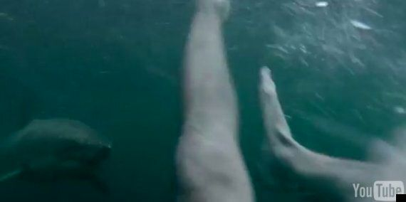 Great White Shark Encounters Swimmer Wearing GoPro Camera In Sydney Harbour