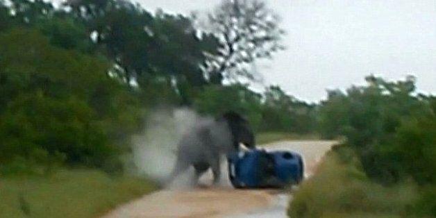 Kruger Elephant's Killing After Tourist Attack Sparks Outrage