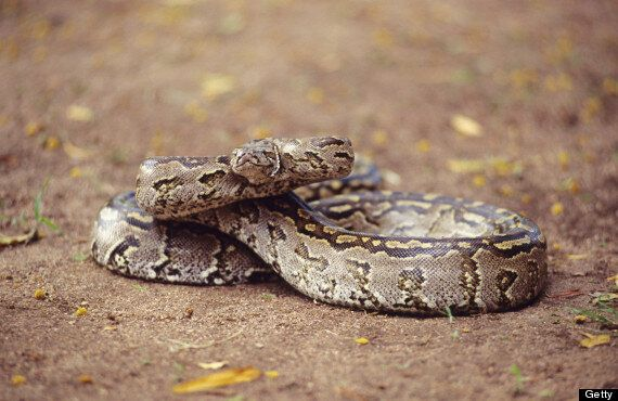 Noah And Connor Barthe Python Deaths: Images Of Asphyxiated Brothers Cleaning Snake Enclosure