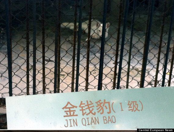 Chinese Zoo Sparks Outrage After Disguising Dog As