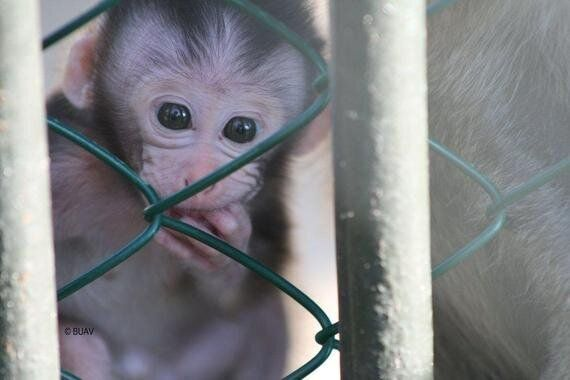 Why the Hindu Community Needs to Help the Monkeys of